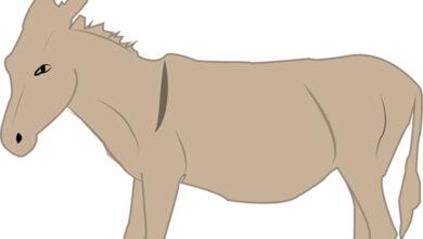 صورة معنى اسم انثى الحمار واسم ذكر الحصان مع الحمار
