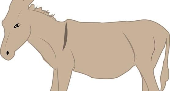 معنى اسم انثى الحمار واسم ذكر الحصان مع الحمار