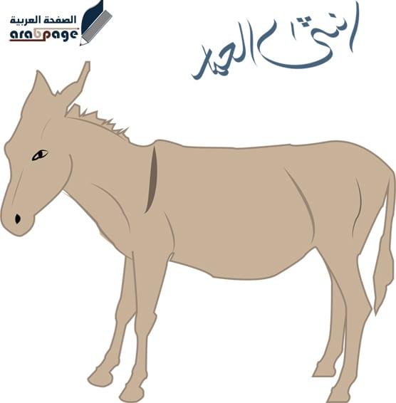 معنى اسم انثى الحمار واسم ذكر الحصان مع الحمار - الصفحة العربية