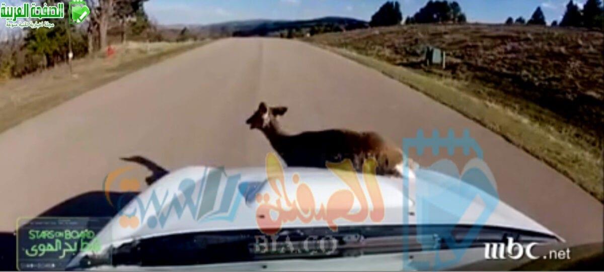 فيديو حادث نانسي عجرم في امريكا مع غزال يوتيوب