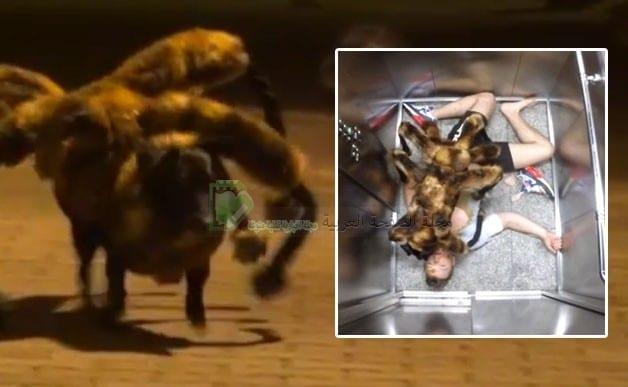 خدعة Mutant Giant Spider Dog الكلب العنكبوت