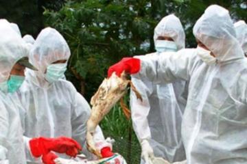 Photo of الصحة: وفاة 6 حالات وإصابة 4 آخرين بإنفلونزا الطيور