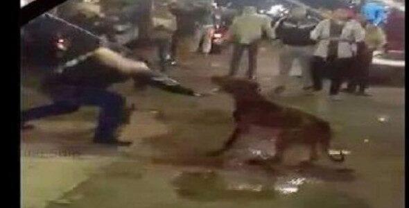 يوتيوب وفيديو قتل وتعذيب كلب شارع الهرم في مصر صور