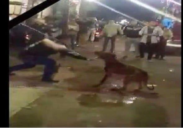 يوتيوب وفيديو قتل وتعذيب كلب شارع الهرم في مصر صور-590x413
