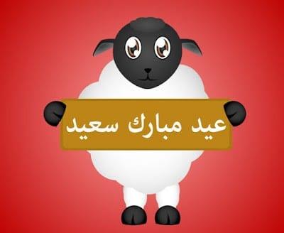 خروف العيد يهنيء