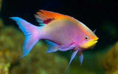 صور سمك 2020 صور حيوانات
