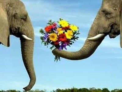 صور فيلة 2020 بطريقة رومانسية