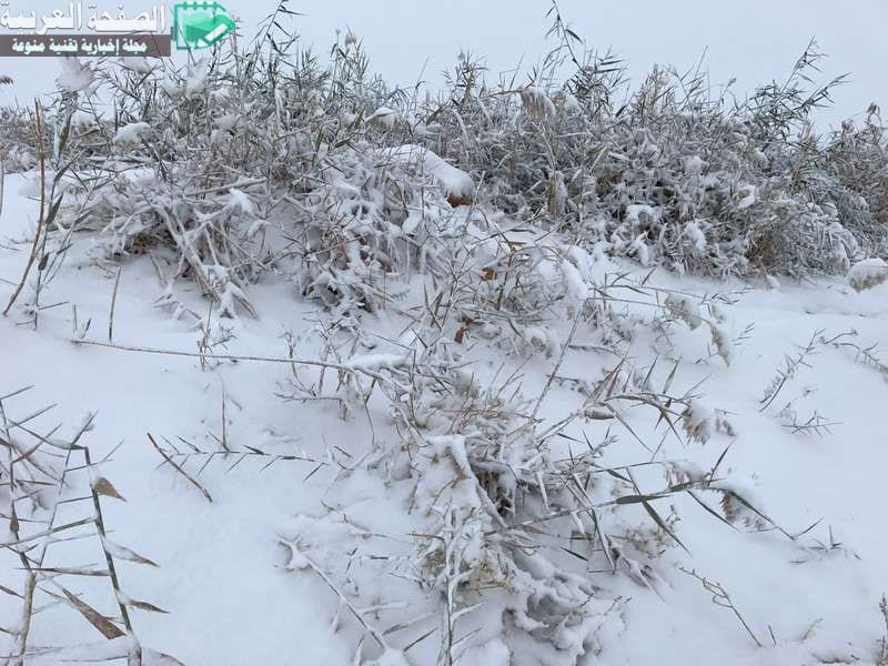 صور ثلوج طريف حالة الطقس