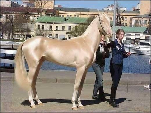 صور خيول 2020 غاية في الجمال صور خيول عربية صور خيول اصيلة 2020