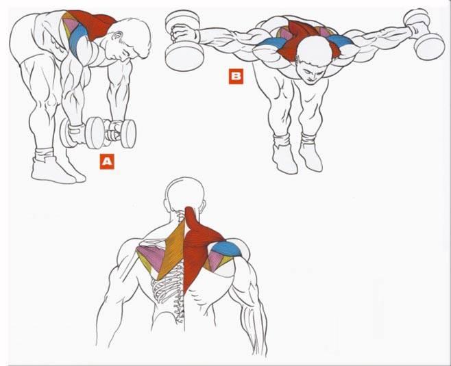 تمرين العضلة الخلفية مع الرقبة