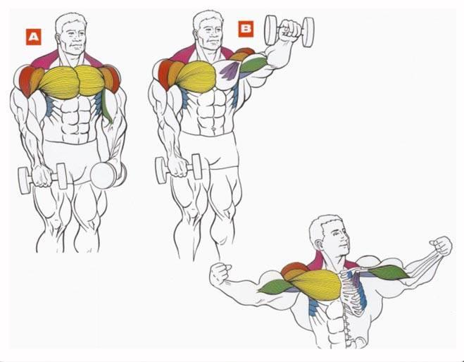استخدام العضلة الجانبية