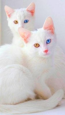 اجمل صور قطط
