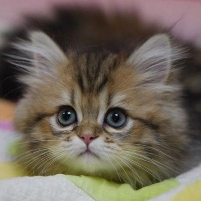 Photos of cats7
