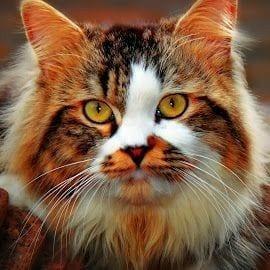 اسماء قطط ذكور ملكية 2021 رائعة وجميلة كيوت - الصفحة العربية