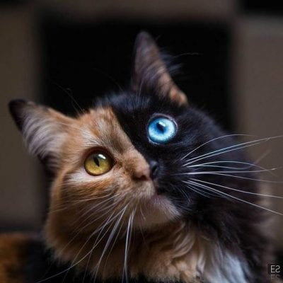 Photos of cats9