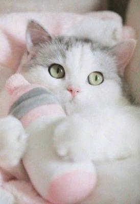 اسماء قطط ذكور وإناث The names of cats