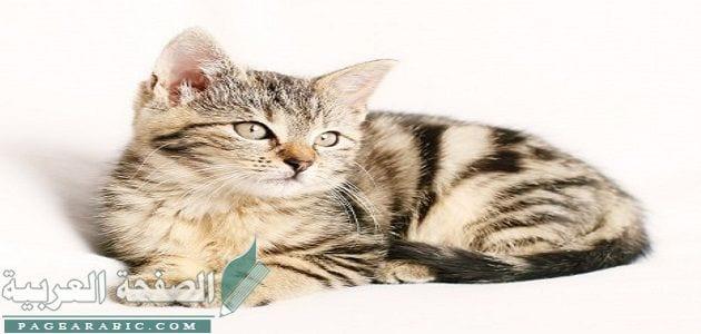 صورة تفسير رؤية القطط في المنام