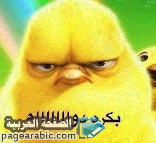 Photo of كلمات اغنية بكرة دوام