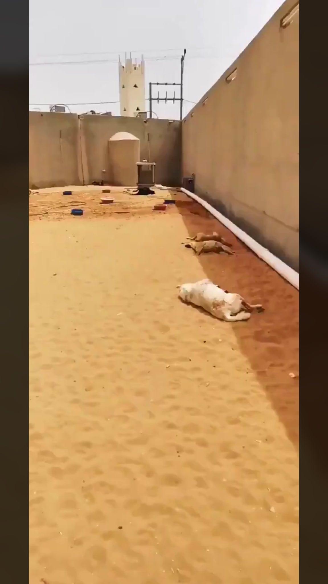 صورة مطالبات بالقبض على قاتل كلاب زاهر سماك في الرياض