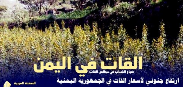 سعر القات اليوم في اليمن وكذلك القات اليابس في السعودية